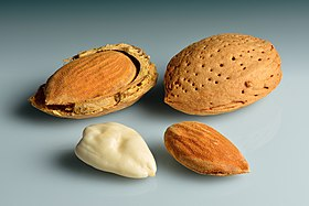 Almonds - in shell, shell cracked open, shelled, blanched.jpg