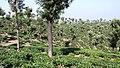 Anamalai Tiger Reserve - panoramio (24).jpg