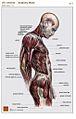 Anatomy page17.jpg