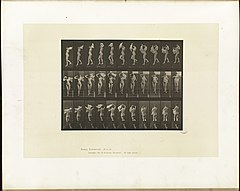 Animal locomotion. Plate 133 (Boston Public Library).jpg