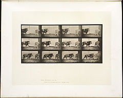 Animal locomotion. Plate 726 (Boston Public Library).jpg