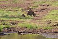 Animals at Pilanesberg National Park 17.jpg
