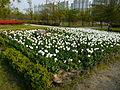 Ansan Lake Park Spring 2015 23.JPG