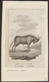 Antilope gnu - 1787 - Print - Iconographia Zoologica - Special Collections University of Amsterdam - UBA01 IZ21400281.tif
