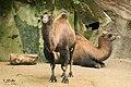 Antwerp zoo, Belgium (2255000082).jpg