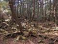 Aokigahara Forest (10863181206).jpg