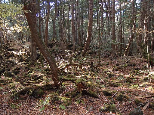 Aokigahara Forest (10863181206)
