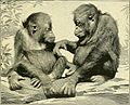 Apes and monkeys; their life and language (1900) (14750902376).jpg
