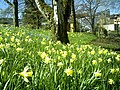 April Freiburg Botanischer Garten - Master Botany Photography 2013 - panoramio (14).jpg