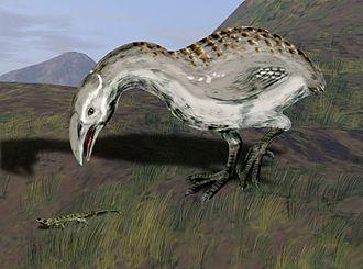 Adzebill - Restoration of A. otidiformis