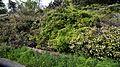 Arch trellis plants in Victorian walled garden at Quex House Birchington Kent England.jpg
