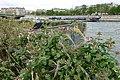 Archipel des Berges de la Seine - Niki de Saint-Phalle @ Parc Rives de Seine @ Paris (33777488095).jpg
