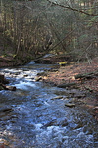 Arnold Creek looking upstream 2.JPG