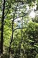 Arzakan-Meghradzor Sanctuary 028.jpg