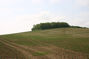 Eadric Streona - Ashingdon hill, one of the possible locations of the battle