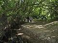 Atascadero Creek (681023243).jpg