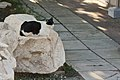 Athens 09 2013 - panoramio (76).jpg