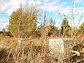 Atriplex patula - spear saltbush and Chenopodium berlandieri - pitseed goosefoot - Flickr - Matt Lavin.jpg