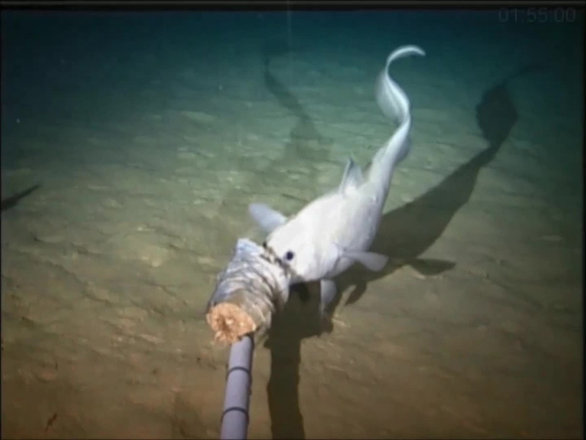 deep sea wikipedia