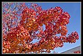 Autumn Leaves begin to fall-041 (5674911865).jpg
