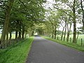 Avenue of trees approaching crossroads near Forth - geograph.org.uk - 184577.jpg