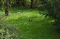 Azé - 20130504 - écureuil dans l'herbe.jpg