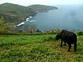 Azores islands of Portugal.jpg