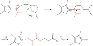 Branched-chain alpha-keto acid dehydrogenase complex - Figure 4: The 2-methylpropanol-TPP is oxidized to form an acyl group while being simultaneously transferred to the lipoyl cofactor on E2. Note that TPP is regenerated.
