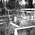 BUGA 1957 Köln Bild15.jpg