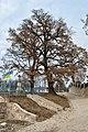 Baikivtsi-Duby-brativ-Mysuliv-15032934.jpg