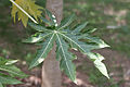 Bambouseraie de Prafrance 20100904 024.jpg