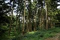 Barham Hill road Elham Valley Way Covert Wood in Barham Kent England 1.jpg