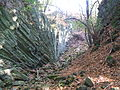 Basaltschlucht Oppidium Dornburg.jpg