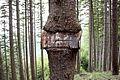 Baum frißt Schild.JPG