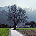 Baum und Misteln. Vaduz, Liechtenstein (36950280122).jpg