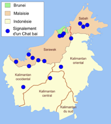 The blue dots on this map of Borneo indicate bay cat records from 2003 to 2005.[2]