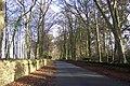 Beech lane in December - geograph.org.uk - 290722.jpg