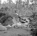 Beek in het oerwoud, Bestanddeelnr 254-5378.jpg
