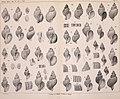 Beiträge zur Kenntnis der Molluskenfauna der Magalhaen-Provinz (1904) (19740625564).jpg