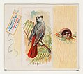 Bengali, from the Song Birds of the World series (N42) for Allen & Ginter Cigarettes MET DP839247.jpg