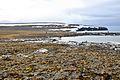 Bennett-Insel 4 2014-08-25.jpg