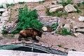 Bernburg (Saale), the bear of the Bernburg castle, image 1.jpg