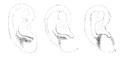 Bertillon - Identification anthropométrique (1893) 062.3 n&b.png