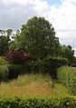 Betts Lane hedged enclosure with wild patch at Nazeing, Essex, England.JPG