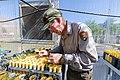 Biotech Sam Reid transplanting seed sprouts to cones (48015957462).jpg