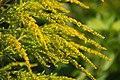 Biotopo inghiaie fiore3.jpg