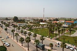Town with many houses and palm trees