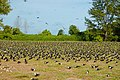 Bird Island Seychelles bird flocks 2.jpg