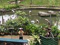 Bird Park in Kuala Lumpur (Malaysia) (45).jpg