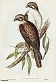 Bird illustration by Elizabeth Gould for Birds of Australia, digitally enhanced from rawpixel's own facsimile book12.jpg